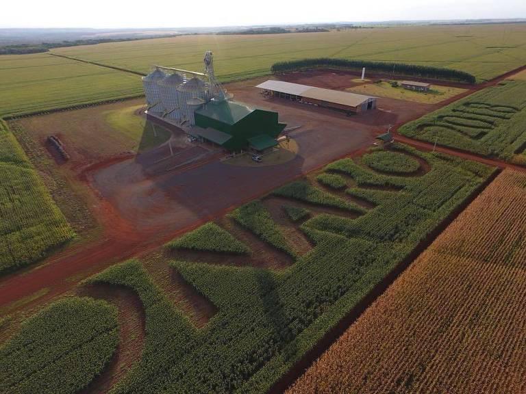 Agricultor escreve nome de Bolsonaro em plantações no MS