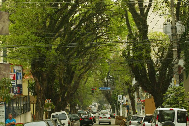 Arvores tipuanas no trecho dos Jardins da Rua da Consolação