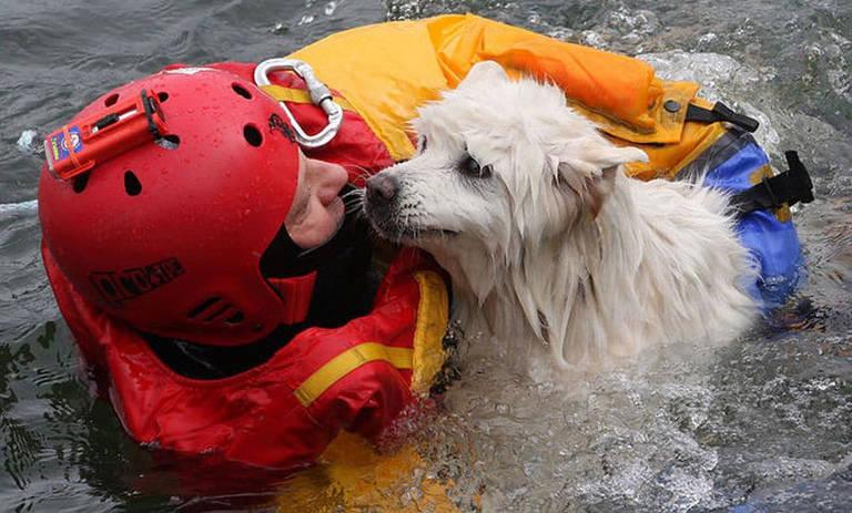 Bombeiros salvando animais