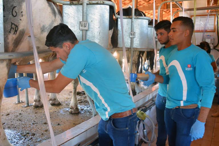 Vacas são ordenhadas mecanicamente em escola técnica