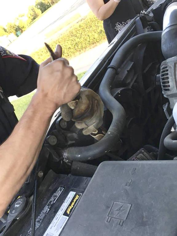 Cobra é encontrada em motor de carro nos EUA