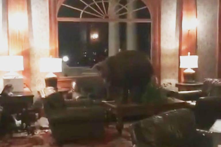 O urso farejou pelo lobby do hotel e foi embora por conta própria