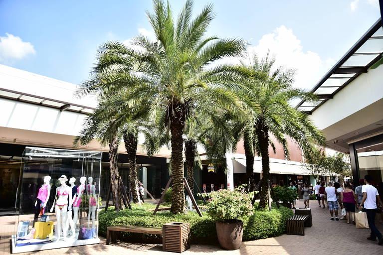 dois coqueiros e lojas de compras