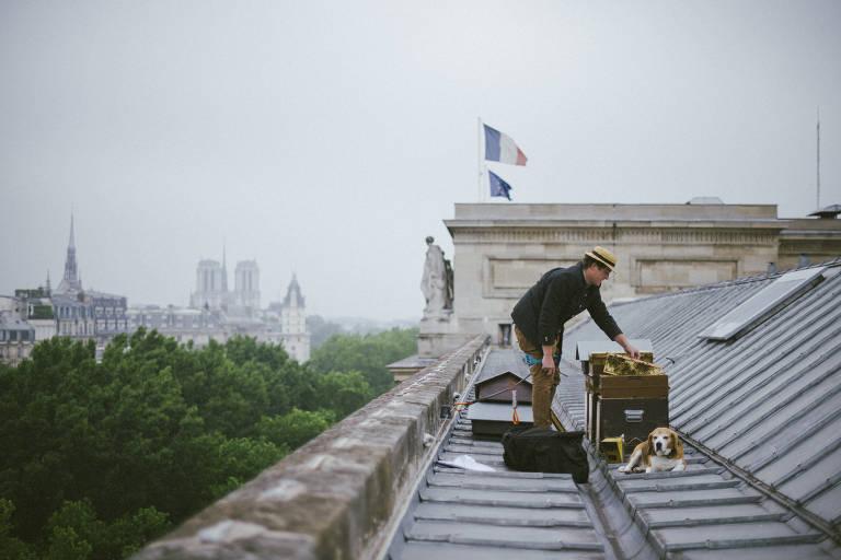 Abelhas em Paris