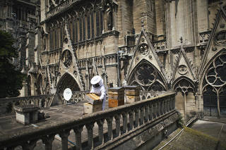 Sibyle Moulin, a beekeeper, tending to bee hives on the roof of Notre-Dame in Paris.