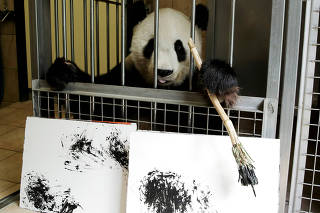 Giant Panda Yang Yang holds a brush behind pictures it painted at Schoenbrunn Zoo in Vienna