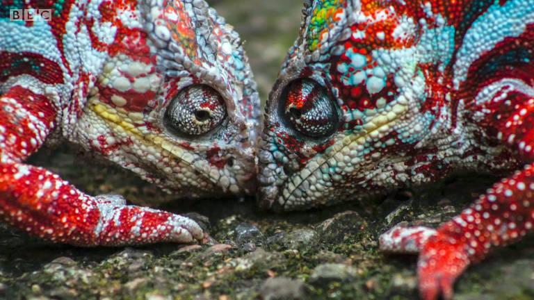 Como os camaleões mudam de cor?