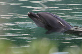 Honey, a bottle-nose dolphin, is seen at abandoned Inubosaki Marine Park Aquarium in Choshi