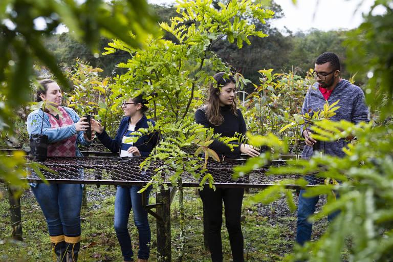 Os estudantes Marina Sbardella, Débora Sousa, Mariana Cardozo, e Paulo Ricardo Fernandes mexem em plantas