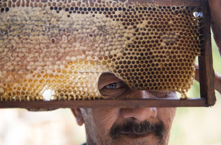 Sem água, mineiro troca criação de gado pela de abelha