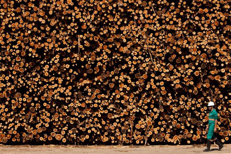Estocagem de eucaliptos na Eldorado, indústria de celulose que esta sendo construída na cidade de Três Lagoas e sera a maior do mundo
