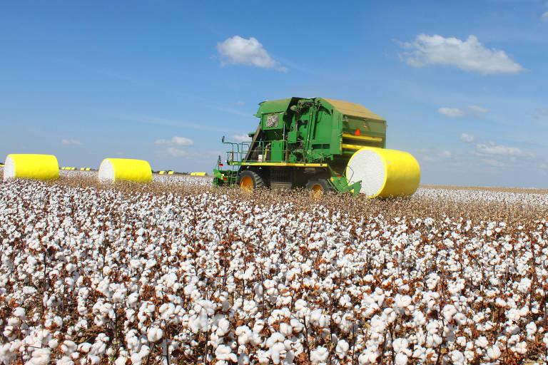 O Brasil vem se tornando um dos principais produtores mundiais de algodão. Na safra 2019/2020, o país deverá atingir o volume de 2,7 milhões de toneladas de pluma. Na imagem: colheita em fazenda no município de Cristalina, interior de Goiás
