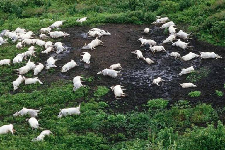 Nuvem de gás tóxico matou mais de 1.700 pessoas e 3.500 cabeças de gado