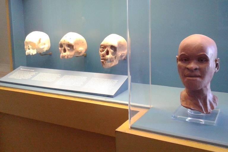 Luzia's skull and facial reconstruction