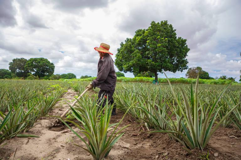 Pequeno agricultor trabalha em plantação em João Pessoa