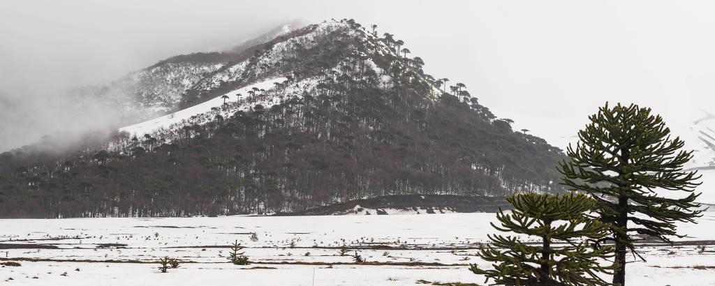 Reserva Nacional Malalhacuello, que abriga a estação de esqui Corralco  e o vulcão Lonquimay, a 700 km de Santiago, no ChileDivulgação
