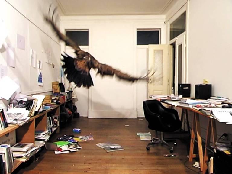 abutre voa em meio a escritório