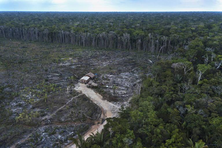 Desmatamento e pecuária