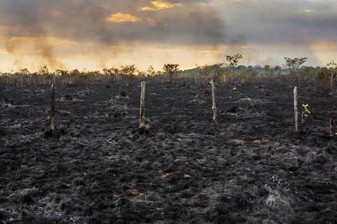 MANAUS, AM. 11/08/2018. BR-319 - Área de pasto queimado as margens da Br-319 próximo a Humaitá . A cidade do sul do Amazonas, está no entroncamento da BR-319 com a Rodovia Transamazônica que é a região com maior taxa de desmatamento do estado. ( Foto: Lalo de Almeida/ Folhapress ) ESPECIAL AMAZÔNIA ***EXCLUSIVO FOLHA***  onlineok ORG XMIT: AGEN1809041308705635