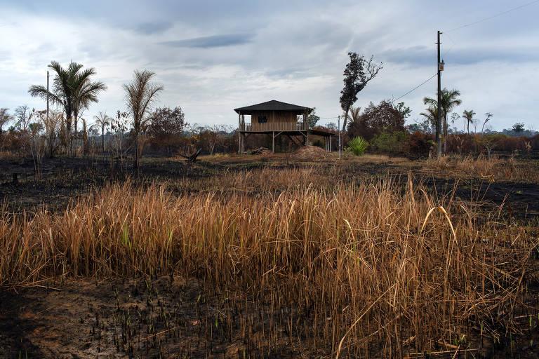 Fazenda de gado no entorno da Floresta Nacional Bom Futuro em Rondônia