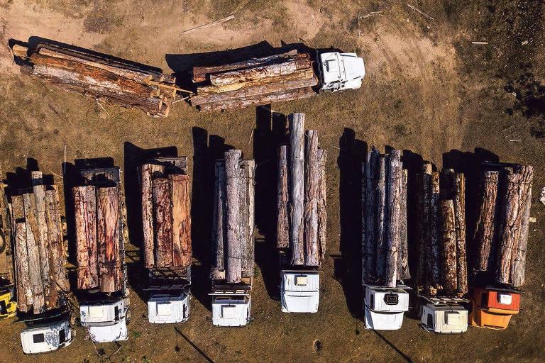 Caminhões com toras estacionados em batalhão da polícia militar ambiental e que foram apreendidos na região da Floresta Nacional Bom Futuro em Rondônia