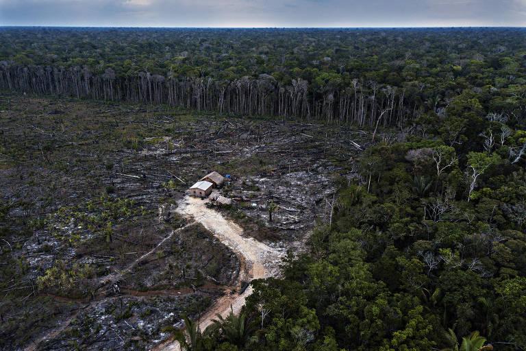 Área desmatada por colono às margens da rodovia BR-319, no Amazonas