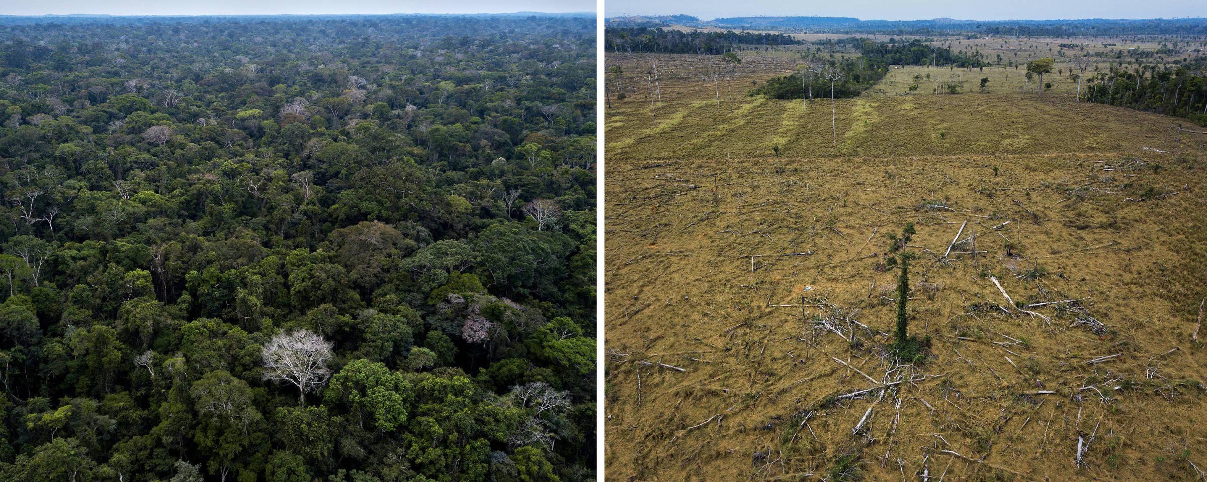 Montagem mostra região da Floresta Nacional Bom Futuro em Rondônia e área desmatada na APA do Rio Pardo