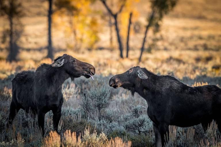 Prêmio de fotografia mostra cenas inusitadas da vida animal