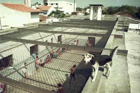 O vira-lata Sabuja enquanto observava os detentos da Cadeia Pública de Mauá (Grande SP)