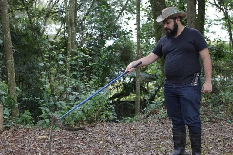 Pesquisadores analisaram tamanho das cobras, indo ao parque 4 vezes por mês