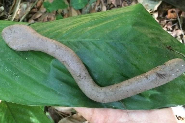 Pesquisadores concluíram que há menos predadores no Parque do Estado, permitindo que mais cobras cresçam