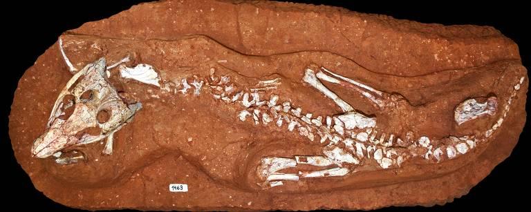 Crocodilo pré-histórico brasileiro