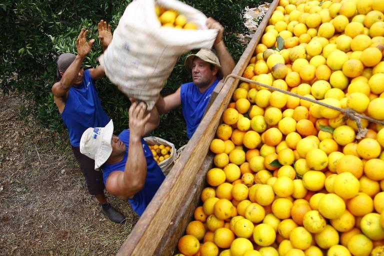 Trabalhadores carregando caminhão de laranja na Fazenda São Luis em Ibitinga