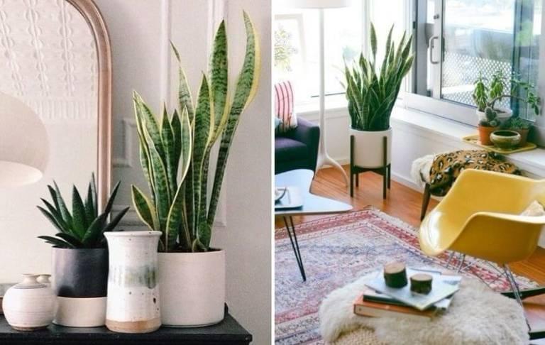 Plantas: filtros de limpeza para energias negativas