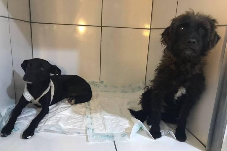 Dois cachorros, um macho e uma fêmea, foram esfaqueados por um homem na Capela do Socorro (zona sul de São Paulo)