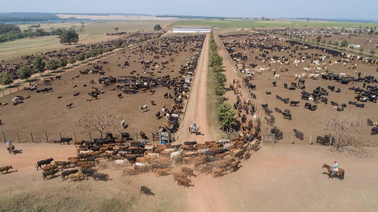 Transporte de gado vivo
