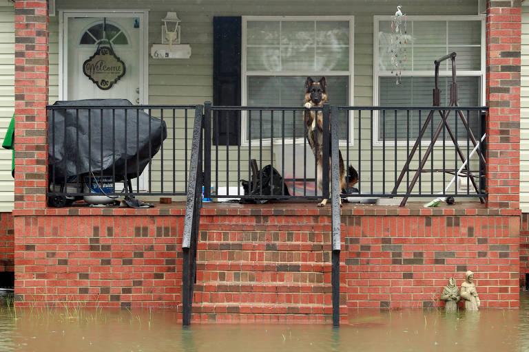 Animais são resgatados e transferidos com avanço do furacão Florence