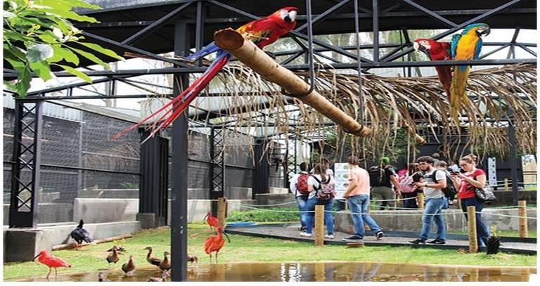 Zoo das Aves em Poços de Caldas (MG)