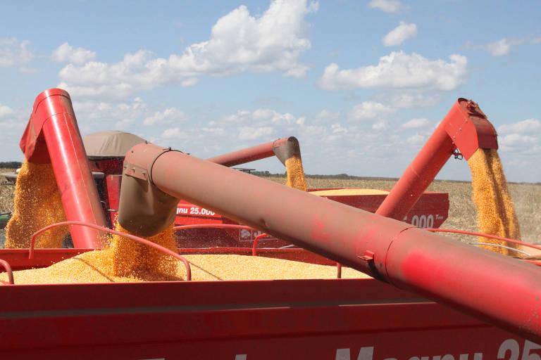 Colheita de milho na fazenda Rio do Sangue, em Brasnorte (MT)