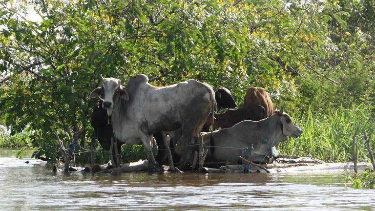 Enchentes na Amazônia