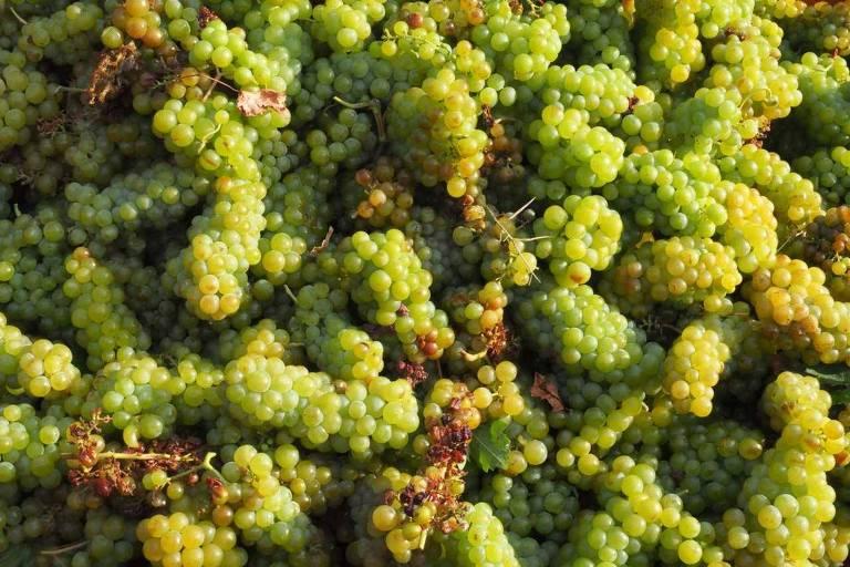 Regiões produtoras de vinho na França