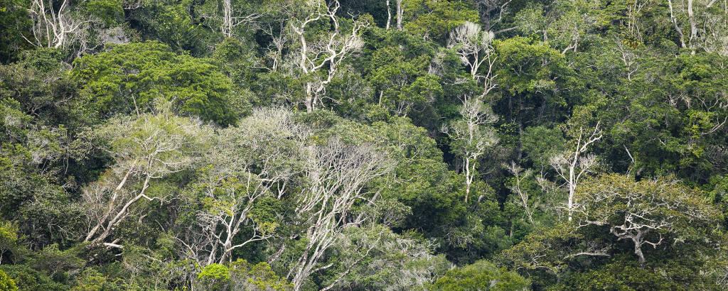 Trecho da mata atlântica no Parque Nacional Pau Brasil, na Bahia