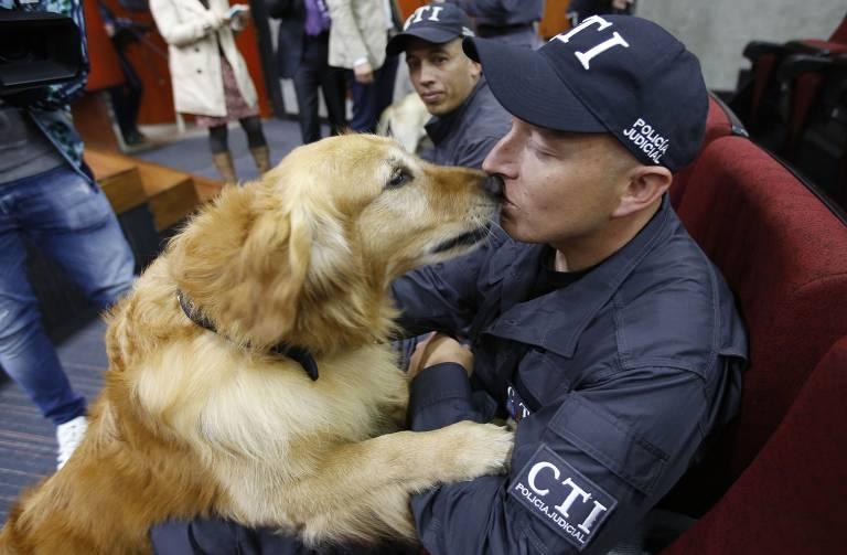 Cães policiais se aposentam na Colômbia