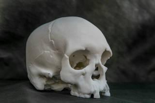 Réplica do crânio de Luzia, fóssil mais antigo da América, em 3D