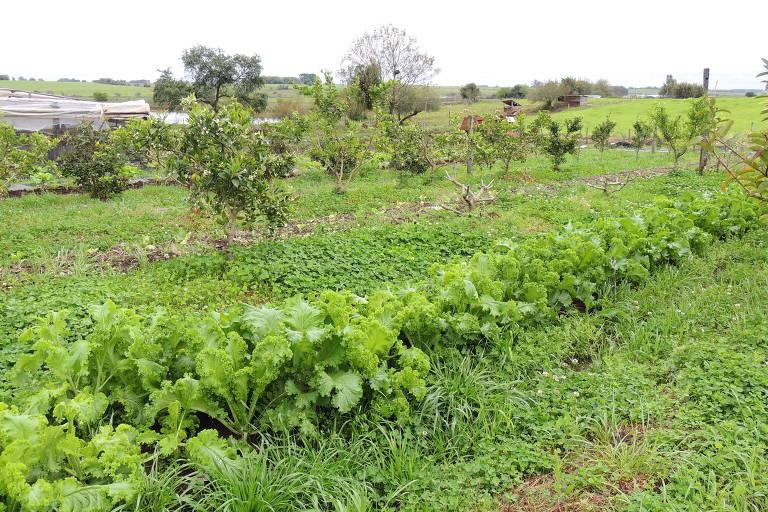 Horta do projeto Quintais Orgânicos, desenhado pela Embrapa Clima Temperado e patrocinado pela Philip Morris