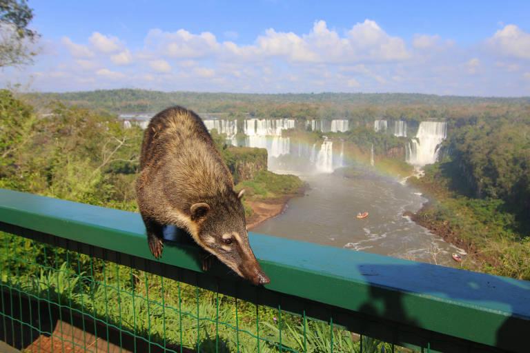Niagara, coitada: só Foz do Iguaçu está na lista das 7 maravilhas da natureza