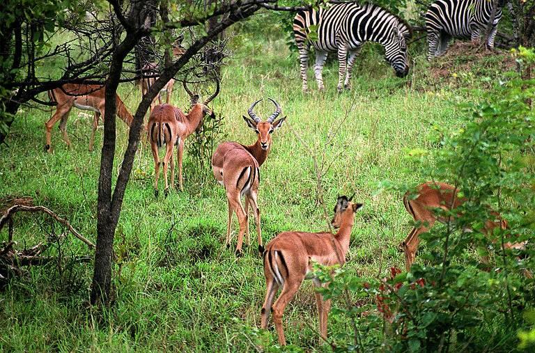 Especial Turismo - Kruger Park