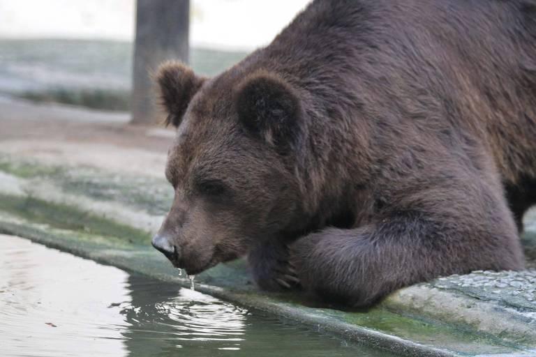 Urso no Zoológico do Parque Dois Irmãos na zona norte do Recife (PE)