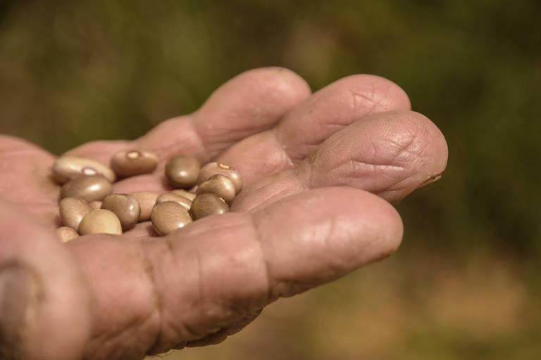 Brasil perde dinheiro da ONU para combate à fome no campo