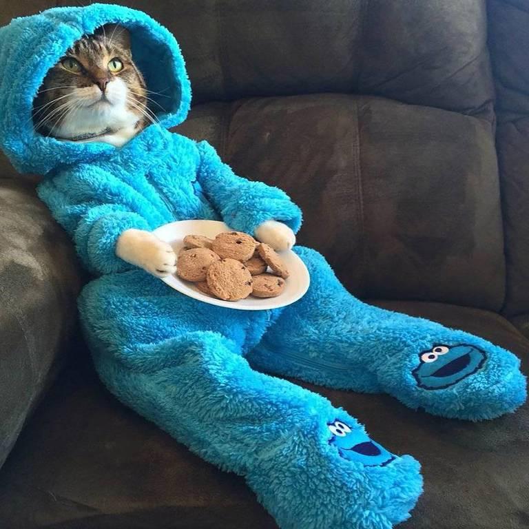 Gato sentado no sofá com fantasia de pelúcia azul segura prato com biscoitos